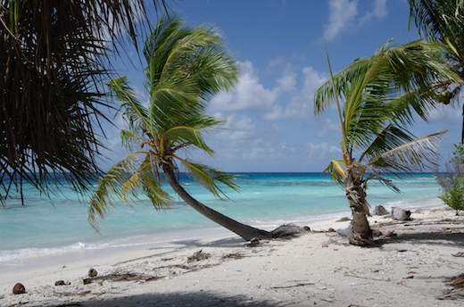 cocotiers, plage, lagon, Fakarava nord